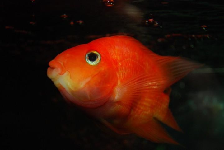 FISH EXTINCTION