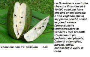 Das ist eine höchst effiziente Pflanze gegen Krebs.