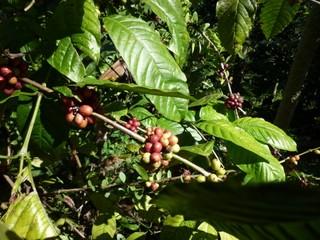 Kaffee/Coffee