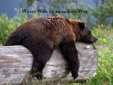 Wo ein Wille ist, ist auch ein Weg.