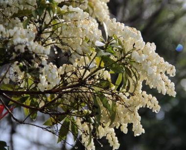 I fiori e il sole sono la sola bellezza che renda tollerabile la vita. Virgilio Brocchi, Die Blumen und die Sonne sind die einzige Schönheit, die das Leben ertragbar macht. The flowers and the sun are the only beauty that makes live bearable.