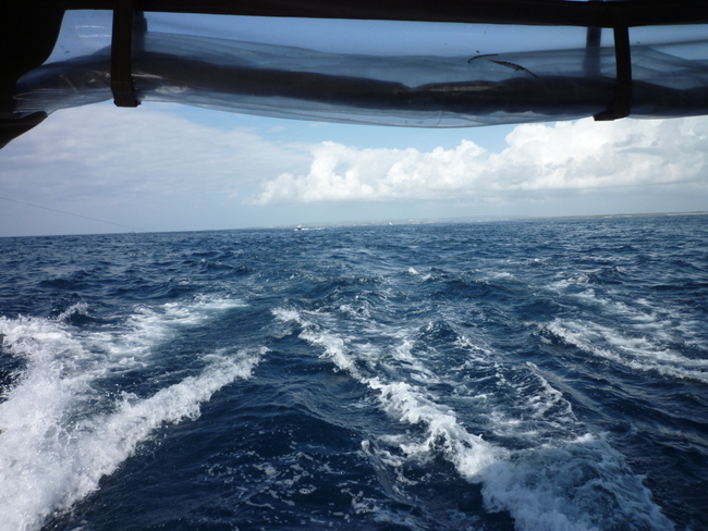 Können Fischzuchten die Lösung sein, wenn die Meere überfischt sind?
