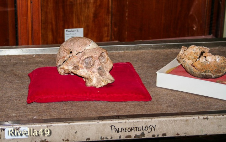 "Schädel/teschio/skull of ""Miss Ples"" 2-3 million years old fossile. Let's hope in a good future for the human being!"