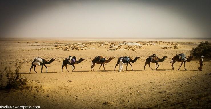 Kamele sind immer noch gefragt!