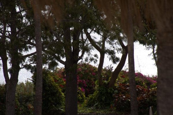 Nel Parco Nazionale Garajonay