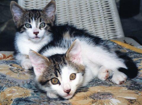 Die wundersame Auferstehung der Katze/Martina Ramsauer