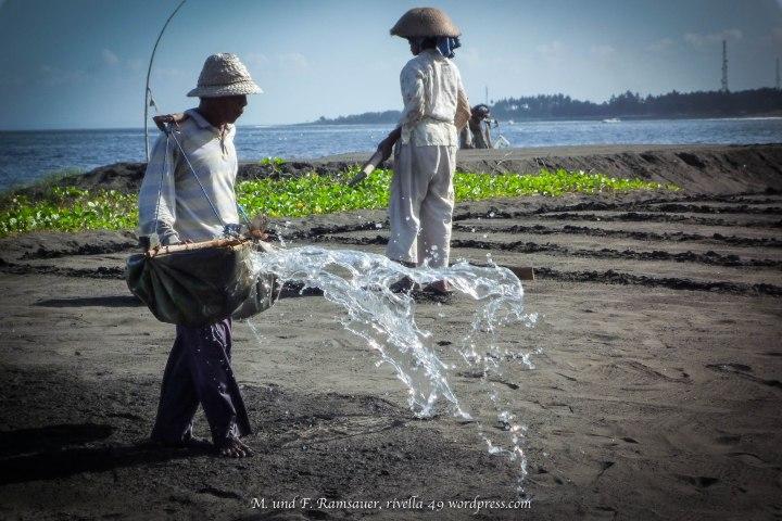 Das Salzwasser wird auf dem schwarzen Sand verteilt. The salt water is distributed on the black sand./L'acqua salata viene distribuita sulla spiaggia nera.