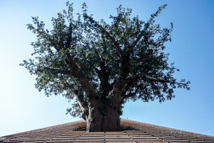Es wäre schön, wenn jemand anfangen würde eine Geschichte über diesen Baum zu erzählen! It would be great, if somebody start to tell a story based on this tree! Sarebbe stupendo, se qualcuno di voi comminciasse di raccontare una storia basandosi su questo albero.:):):)