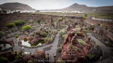Selbst dem Kaktus setzte Manrique ein Denkmal!! Es gibt hier 10'000 Kaktus und 1'400 verschiedene Arten!