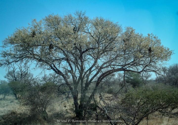 MONKEYS ON THE TREE