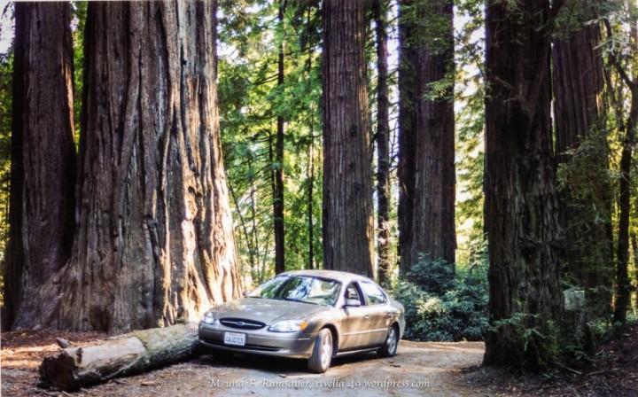 Sequoia134