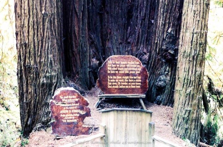 Sequoia136