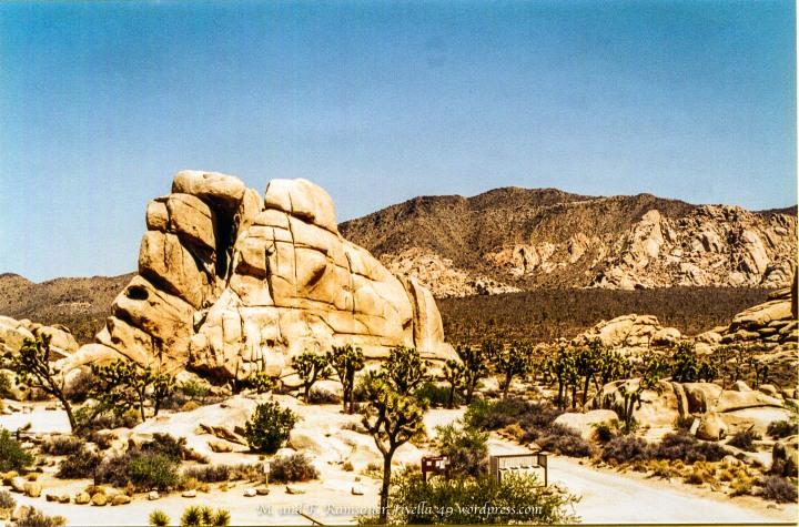 Il Joshua Tree parco in California del sud si incontra con il deserto Moraja, dove Cheryl ha iniziata la sua grandissima camminata.