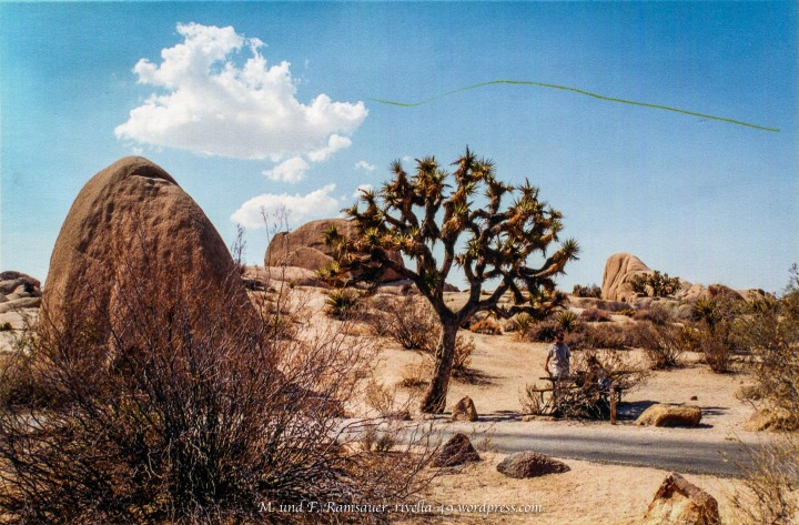 Cheryl started her PCT in the Mojave desert, where it meets the Joshua Tree National Park. This is exactly where I have been!!