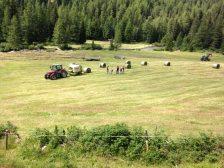 Beim Heuen/Making hay