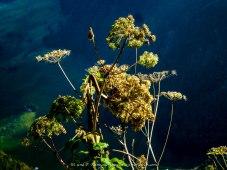 Blumen/flowers/fiori
